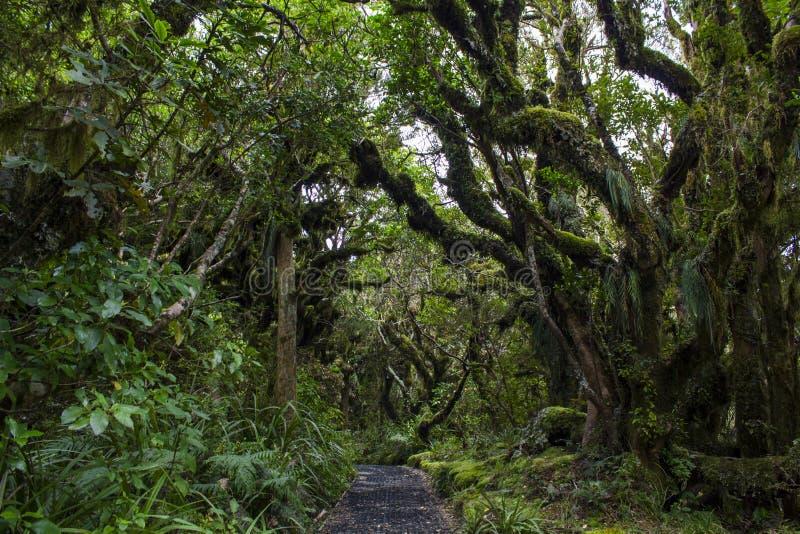 恶鬼森林在新西兰 库存照片
