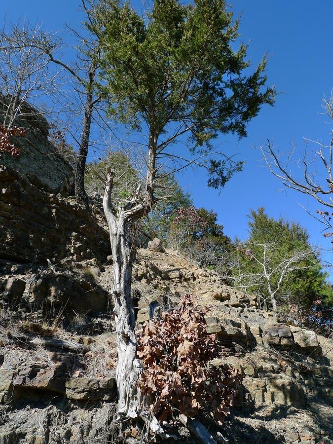 恶魔` s小室国家公园,阿肯色陡峭的岩石和树 免版税图库摄影