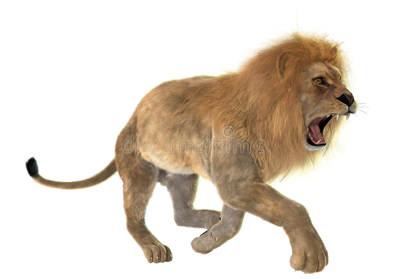 恼怒的狮子 库存照片