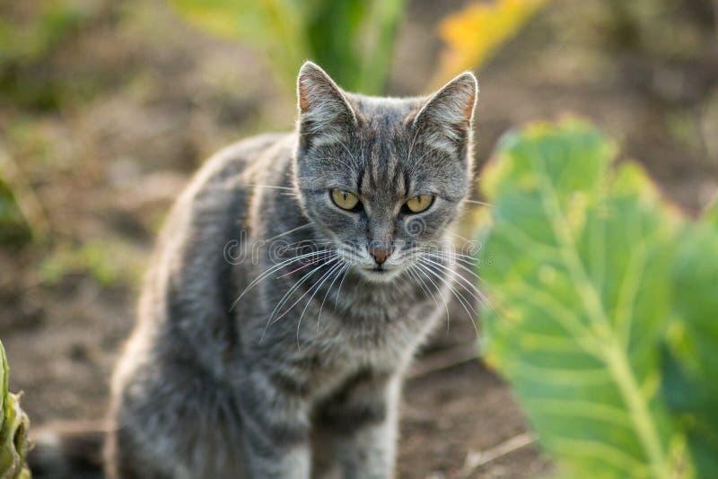 恼怒的猫坐地面在圆白菜叶子 免版税库存照片
