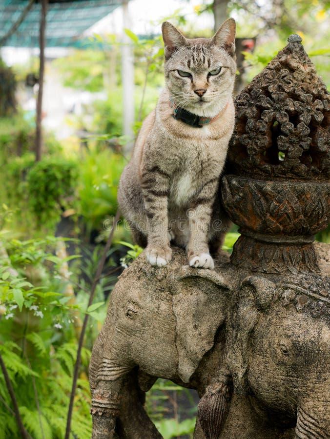 恼怒的猫坐大象头 图库摄影