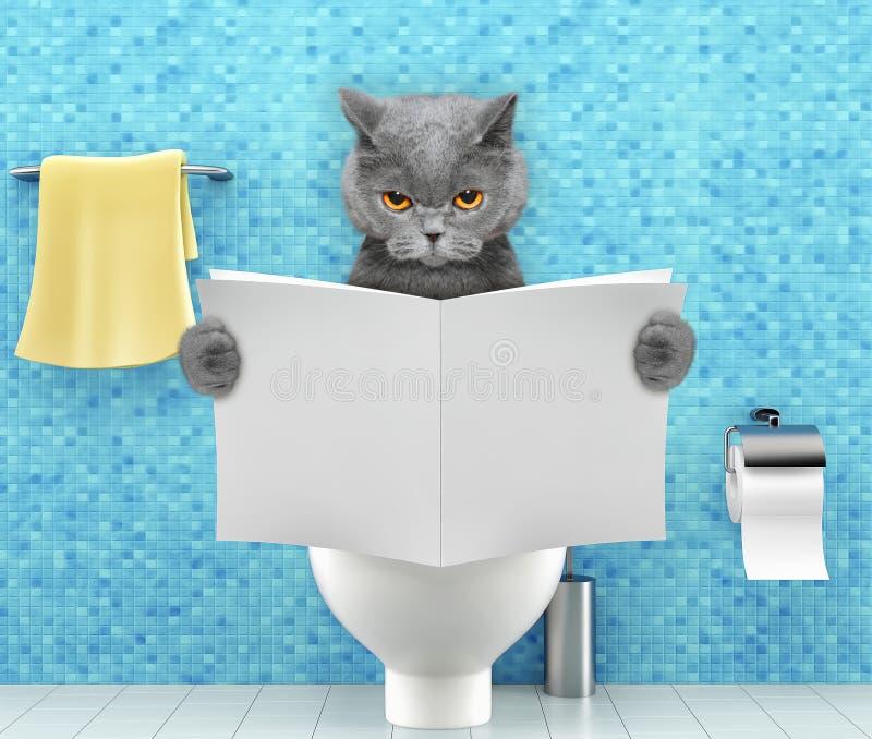 恼怒的猫坐有消化问题或便秘读书杂志或报纸的一个马桶座 免版税库存图片