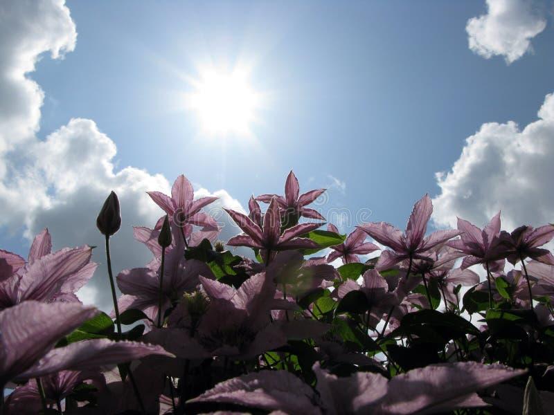 您庭院的夏令时 图库摄影