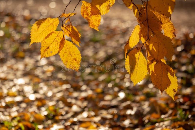 您的设计的抽象秋季背景 免版税库存图片