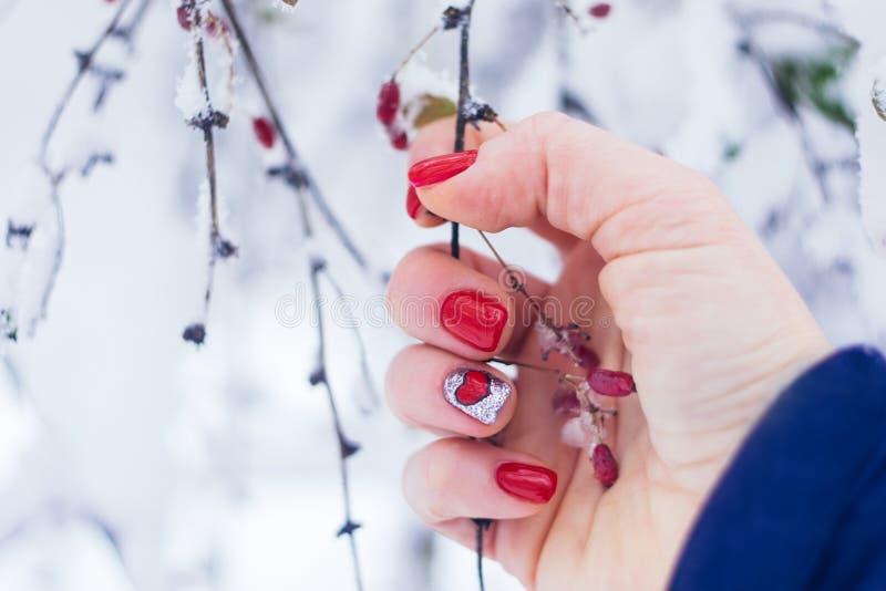 情人节指甲艺术设计修指甲 有拿着在冬天背景的明亮的红心修指甲的女性手红色莓果 免版税图库摄影