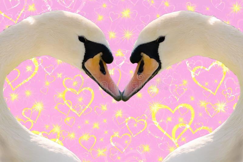 情人节概念,一起做心形的两只天鹅在与金黄闪耀的心脏的桃红色背景 皇族释放例证