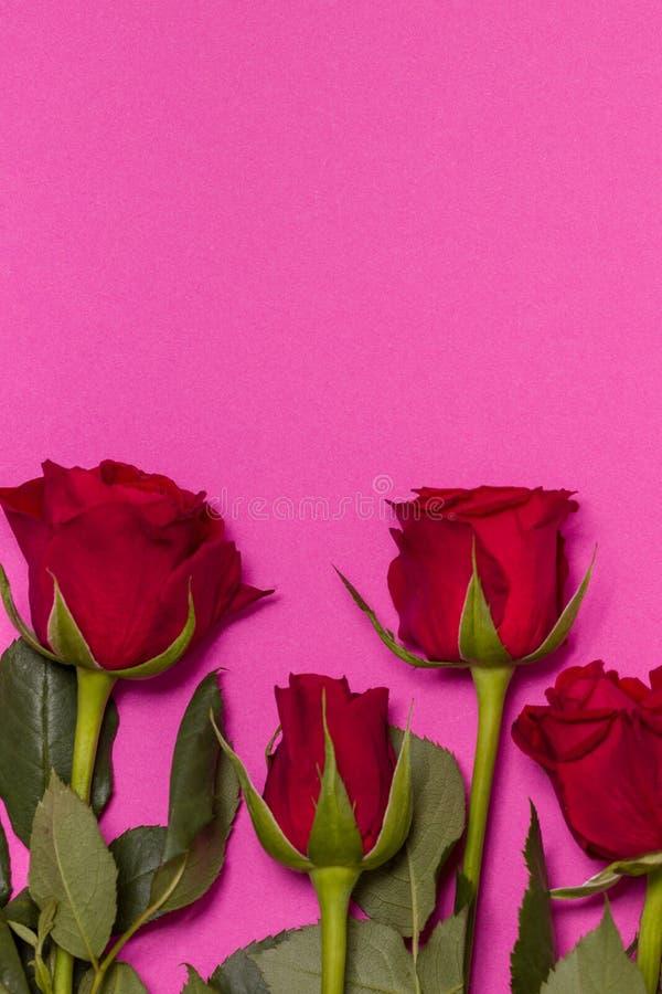 情人节背景,与红色玫瑰色边界,赠送阅本文本空间的无缝的桃红色背景 图库摄影