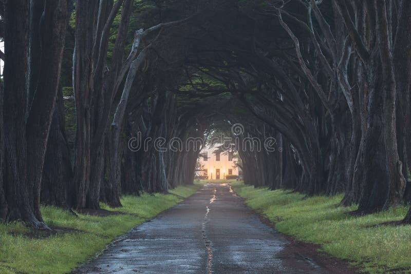 惊人在点雷耶斯全国海滨,加利福尼亚,美国的柏树隧道 童话树在好天气 免版税库存照片