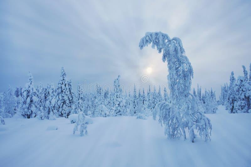 惊人拉普兰原野在冬天 免版税库存图片