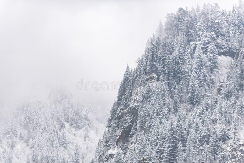 惊人木位于巨大的岩石 库存图片