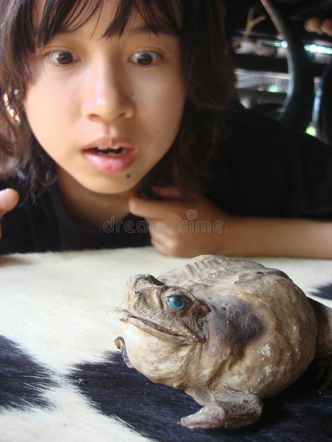 惊人的女孩和微笑的巨型青蛙 免版税库存图片