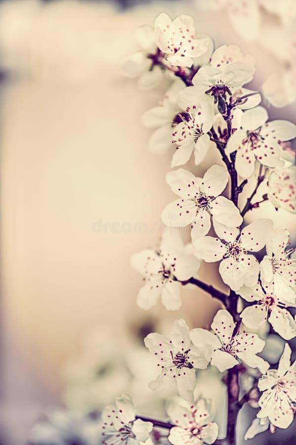 惊人的春天樱花,花卉边界,春天自然背景 图库摄影