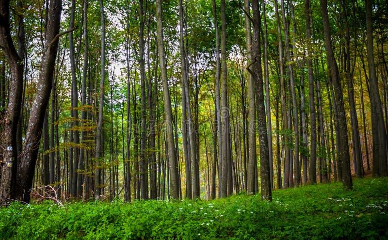 惊人的森林 免版税库存图片