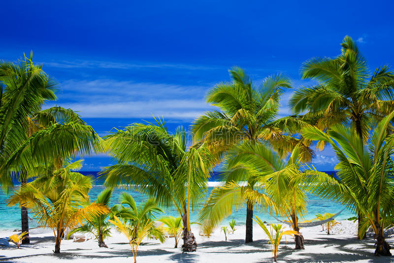 惊人的海滩前面棕榈树 库存图片