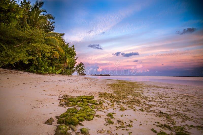 惊人的热带海滩日出或日落风景、棕榈树和五颜六色的天空 库存图片