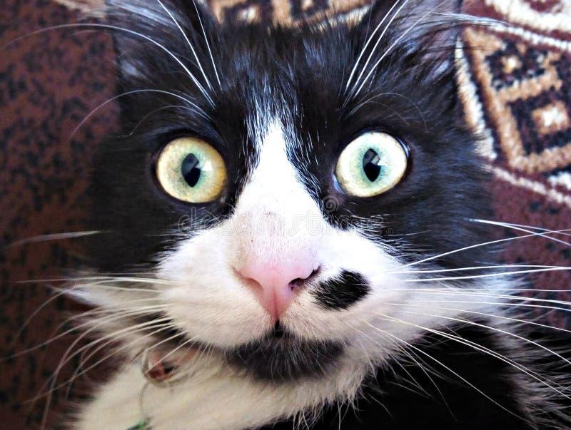 惊人的猫 免版税库存图片