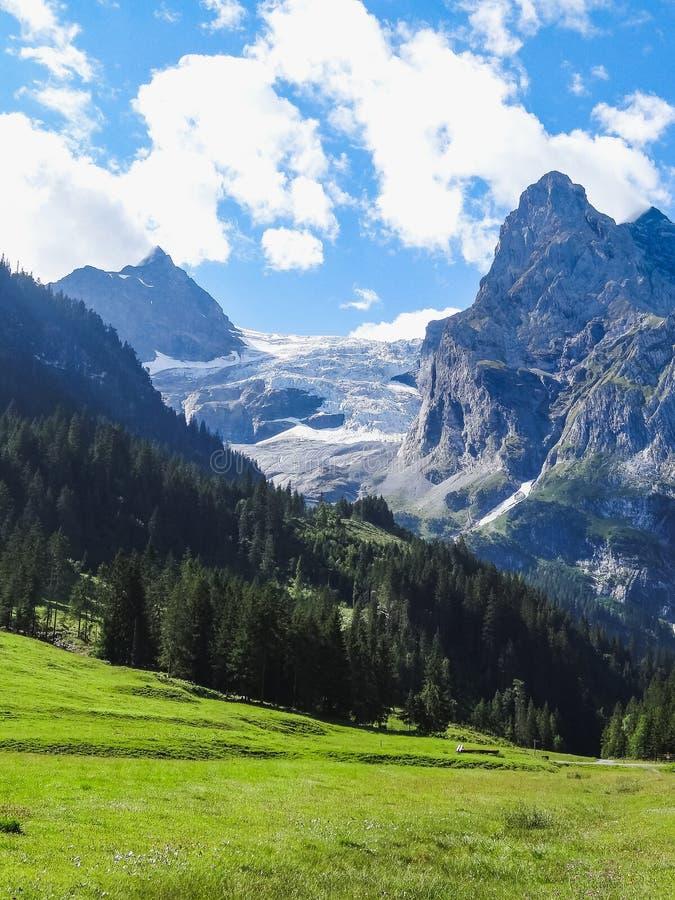 惊人的瑞士阿尔卑斯Wetterhorn在夏天格林德瓦 免版税图库摄影