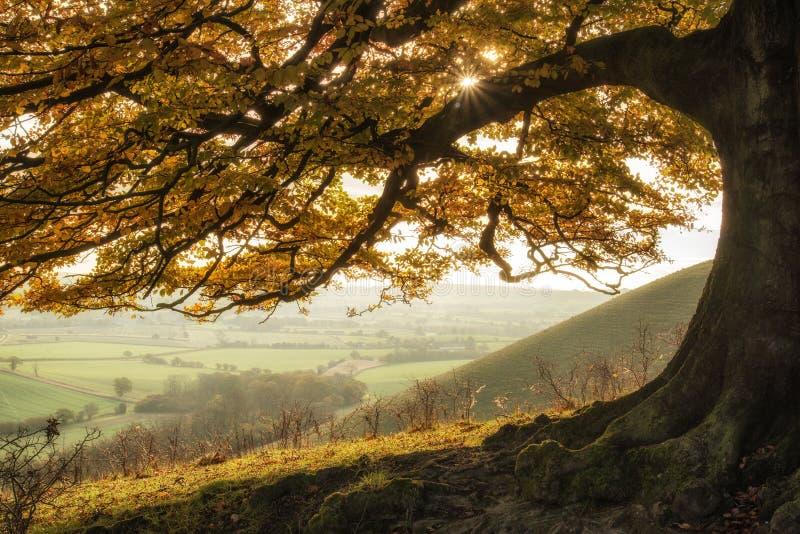 惊人的秋天早晨阳光通过金黄点燃风景 免版税图库摄影