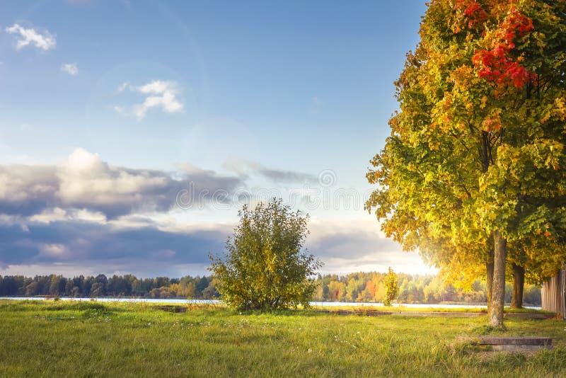 惊人的秋天风景在五颜六色的公园在晴朗的晚上 色的树和香草天空在10月 秋天 库存照片
