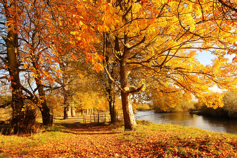 惊人的秋季结构树在苏格兰的公园 免版税库存照片