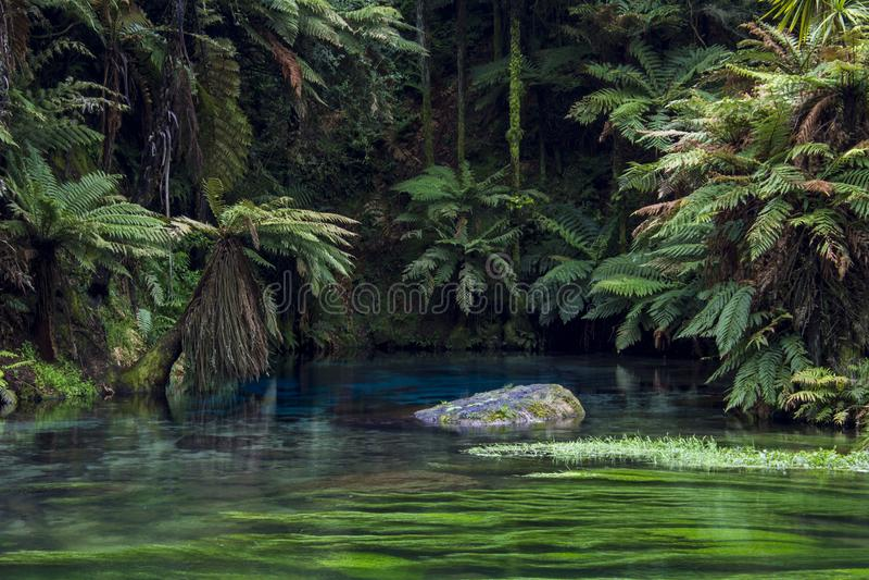 惊人的蓝色水池和透明的水在新西兰` s蓝色春天,怀卡托在新西兰 库存图片
