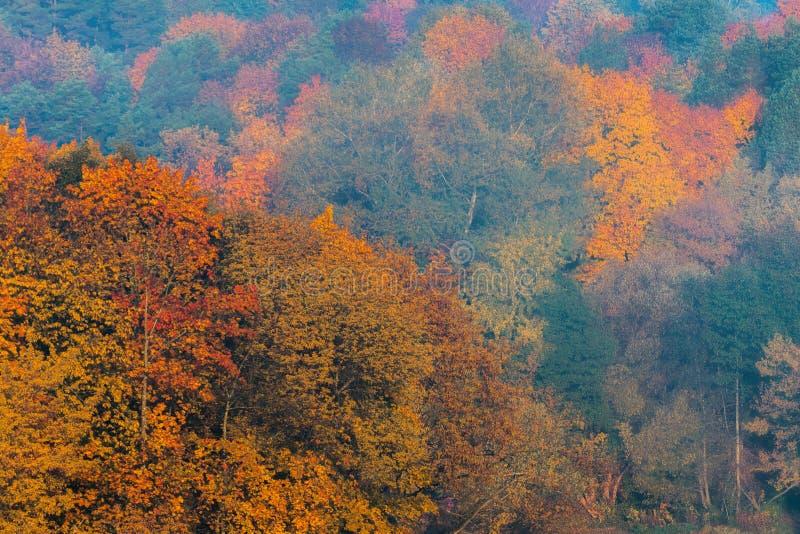 惊人的金黄,黄色,红色,绿色秋天颜色在森林里, 图库摄影
