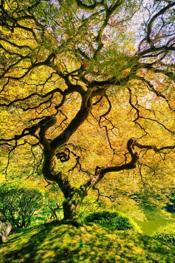 惊人的绿色树 库存照片