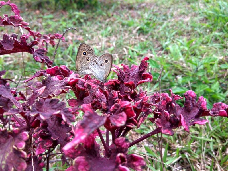 惊人的butterflys 免版税库存照片