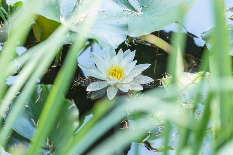 惊人的lilly浪端的白色泡沫特写镜头在夏天 免版税图库摄影