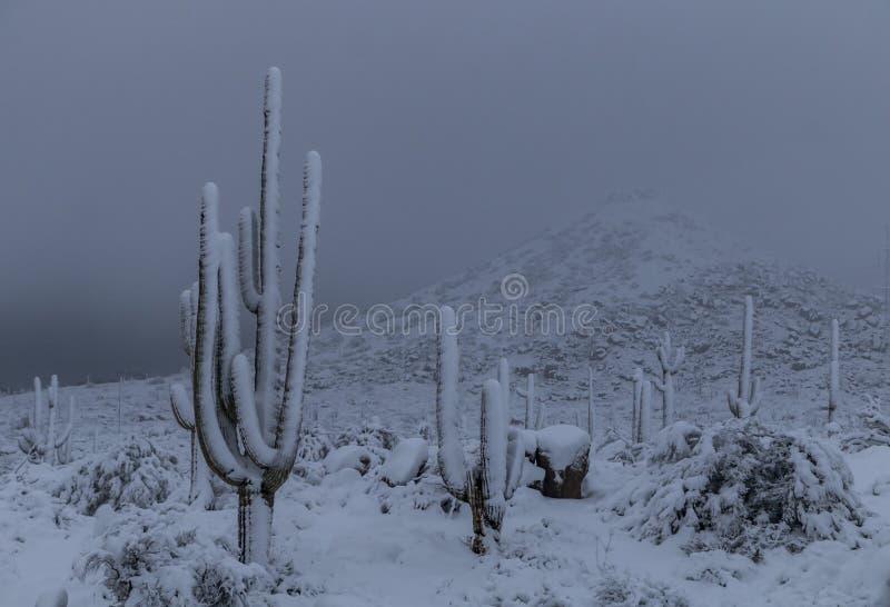惊人积雪的柱仙人掌仙人掌在亚利桑那 库存照片