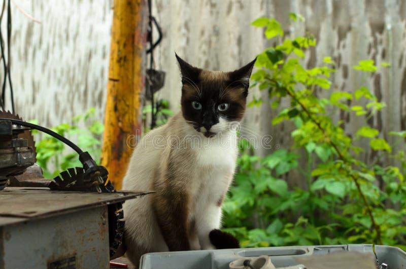 惊奇的猫在房子的后院 库存图片