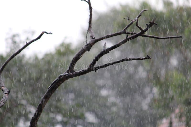 惊奇阵雨 免版税库存照片