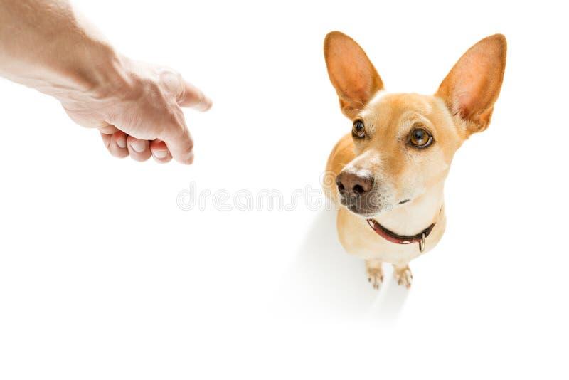 惩罚他的狗的所有者 库存照片