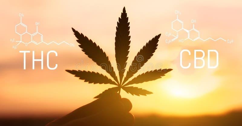 惯例CBD THC的大麻 Cannabidiol和Tetrahydrocannabinol化学式  分子结构 库存例证