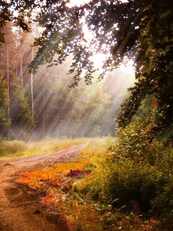 幻想森林背景 库存照片