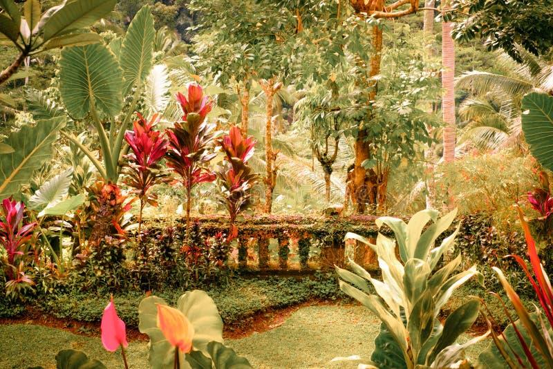 幻想热带庭院的超现实的颜色 免版税库存图片