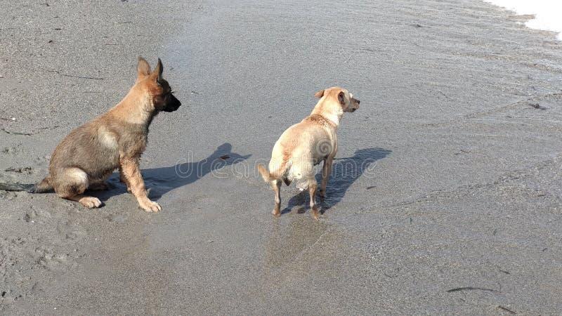 愉快地使用在海的小狗 图库摄影
