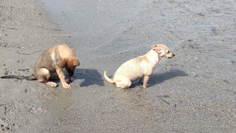 愉快地使用在海的小狗 免版税库存照片