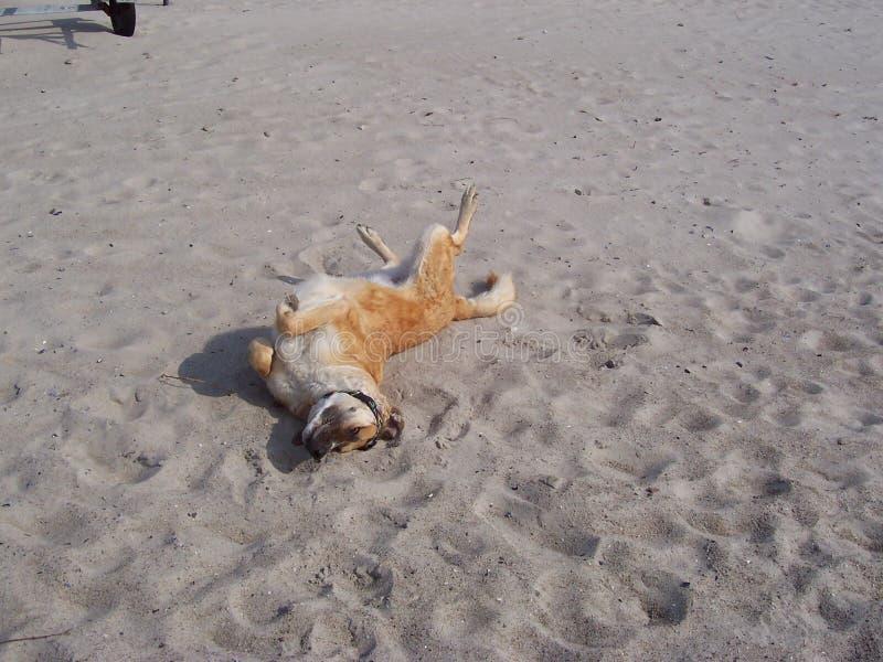 愉快海滩的狗 免版税库存图片