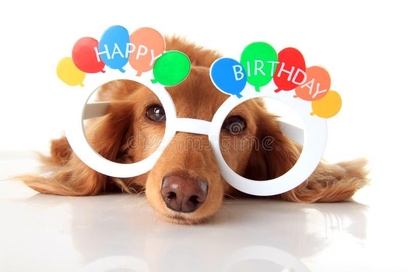愉快生日的狗 免版税库存图片