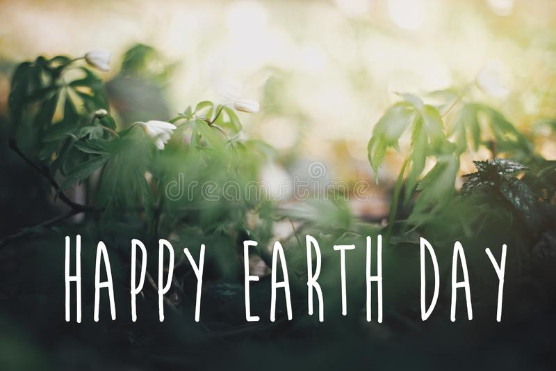 愉快的世界地球日文本,在美丽的银莲花属花的标志在晴朗的春天森林,选择聚焦 ?? r 免版税库存照片