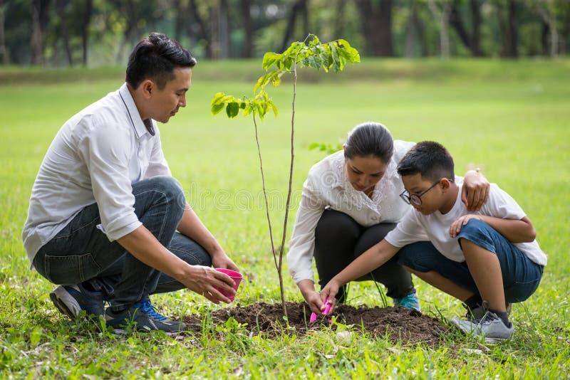 愉快的亚洲家庭、父母和他们的儿童植物树苗树一起在公园 父亲母亲和儿子,获得的男孩乐趣和 库存图片