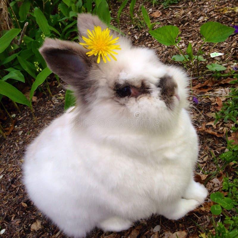 愉快的兔宝宝 库存照片