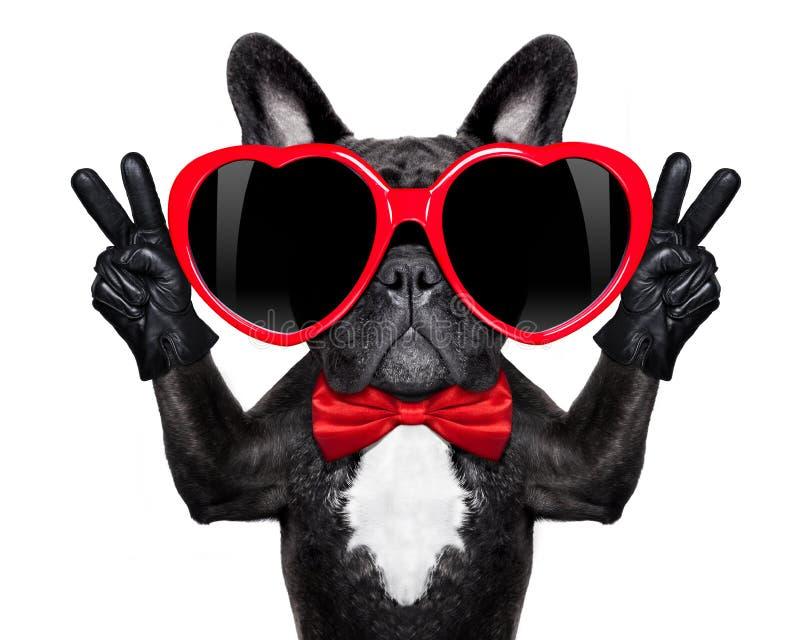 愉快的凉快的狗 免版税库存照片