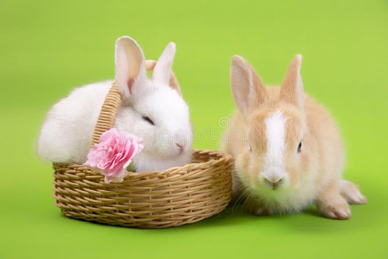 愉快的复活节彩蛋收藏、逗人喜爱的兔子兔宝宝在篮子和蛋着色 免版税库存照片