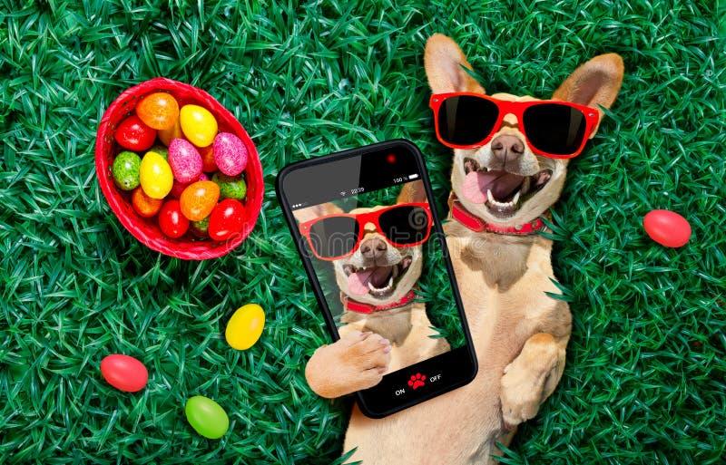 愉快的复活节狗用鸡蛋 免版税库存照片
