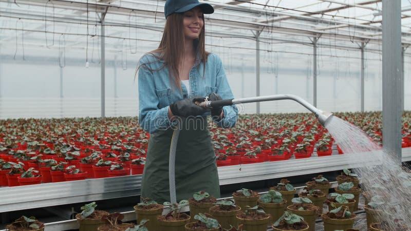 愉快的女性花匠水厂和花与一根橡胶软管自晴朗的工业温室 免版税库存图片