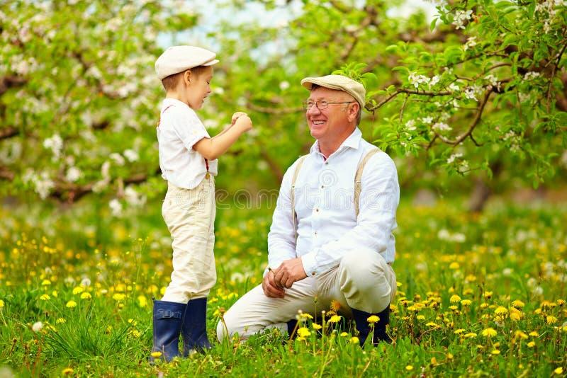 愉快的孙子和祖父获得乐趣在春天庭院,吹的蒲公英 免版税库存照片