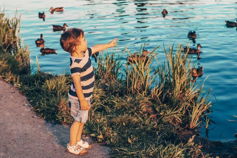 愉快的孩子,小男孩看看鸭子在湖和举行在手上成长户外 被定调子的减速火箭 夏天 图库摄影