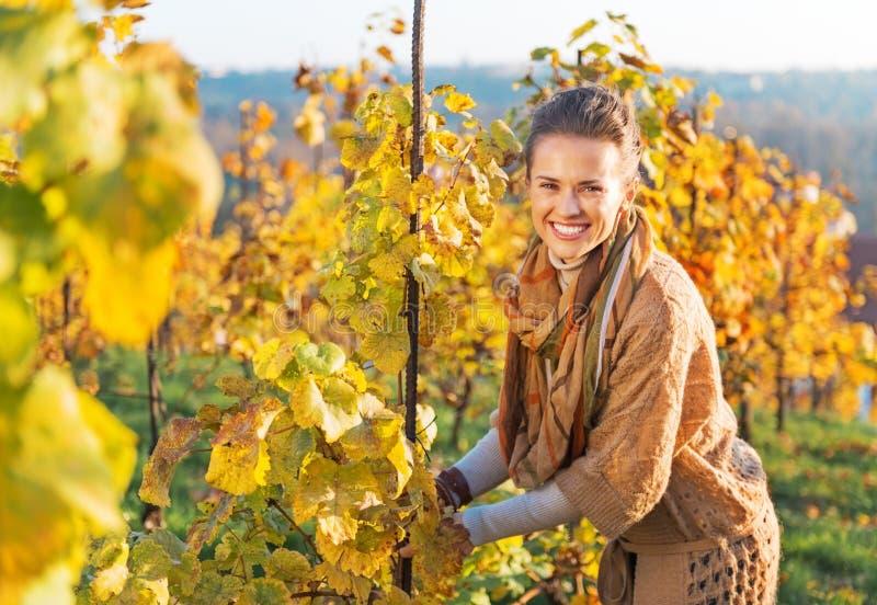 愉快的少妇在喜欢灌木的葡萄园里 库存照片